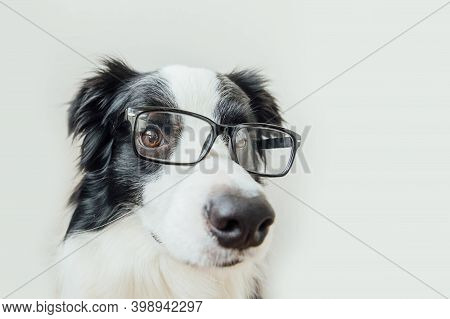 Funny Studio Portrait Of Smiling Puppy Dog Border Collie In Eyeglasses Isolated On White Background.