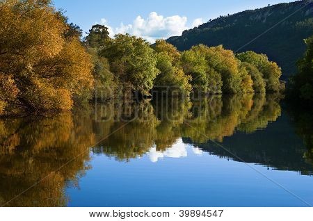 Riverbank Trees And Reflection