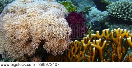 View of a coral reef with colorful hard and soft corals