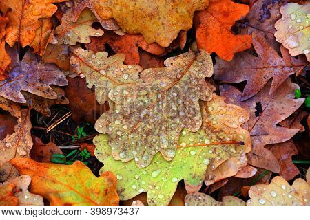 abstract autumn background with leafage with watr drops