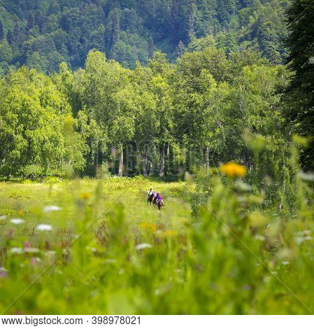 Russia, Caucasus Mountains - June 14, 2018: The Horse Riding Routs At Caucasus Mountains Are Very Po