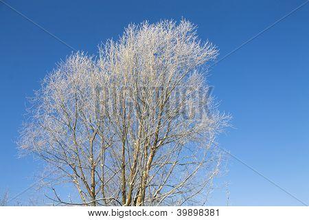 Winter Tree On Blue Sky Background