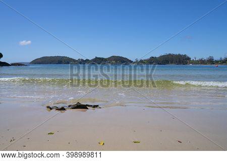 Kelp On Butterfield Beach, Stewart Island New Zealand