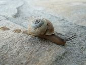 Garden snail on stone floor background with slime train poster