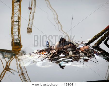 Bird nesting in London's docklands with crane reflection. poster