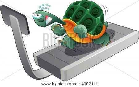 Turtle Fitness