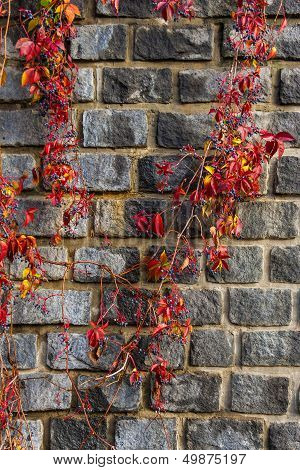 Red Foliage Winds By Old Stone Wall