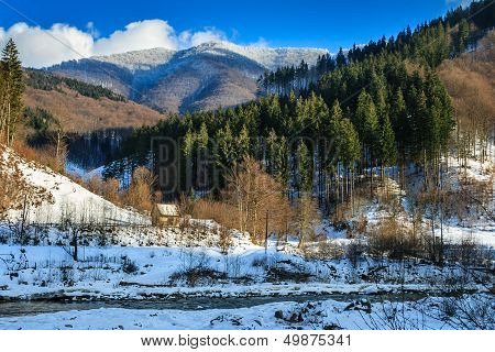 Coniferous Forest On The Snowy Mountain Peaks