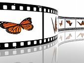 Image of a monarch butterfly on a film cell poster