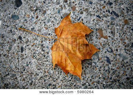 Golden Autumn Leaf On Concrete