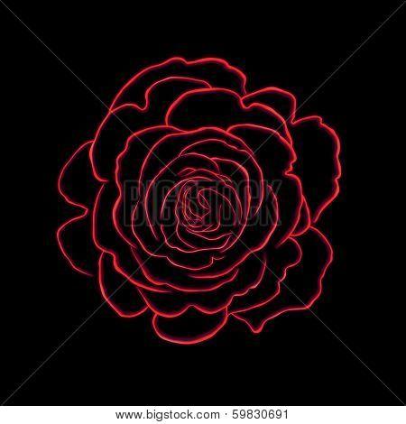 Rose Art Illustration