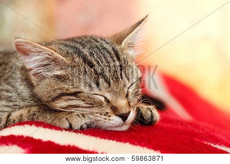 Young Tabby Cat Sleeping