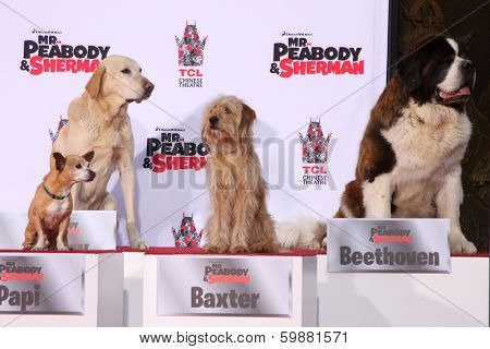 LOS ANGELES - FEB 14:  Papi, Marley, Baxter, Beethoven at the Mr. Peabody honored with Pawprints in Cement at TCL Chinese Theater on February 14, 2014 in Los Angeles, CA