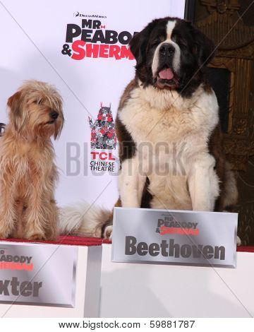 LOS ANGELES - FEB 14:  Baxter, Beethoven at the Mr. Peabody honored with Pawprints in Cement at TCL Chinese Theater on February 14, 2014 in Los Angeles, CA