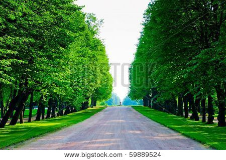 Tall Trees With Lush Foliage