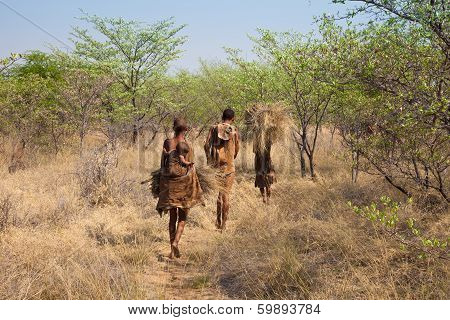 Bushmen of Botswana