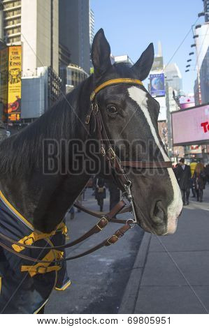 NYPD  horse on Times Square during Super Bowl XLVIII week in Manhattan