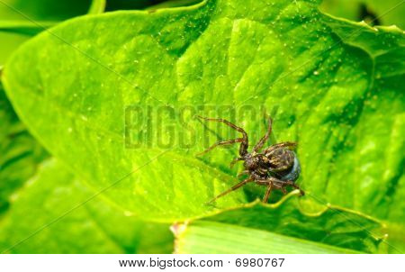 the image of spider on the leaf poster