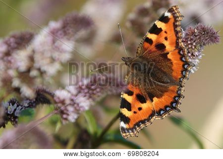 A close up of a beautiful butterfly