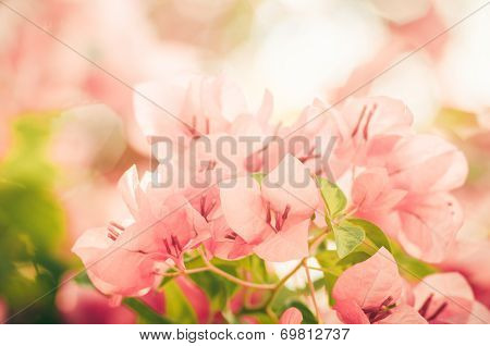 Paper Flowers Or Bougainvillea Vintage