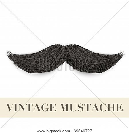 Realistic Black vintage curly mustache