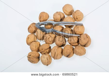 ripe walnuts heap isolated on white background poster