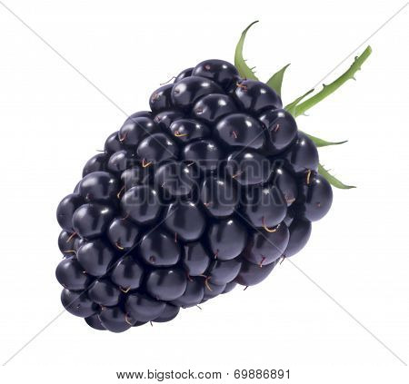 Black berry Isolated On White Background