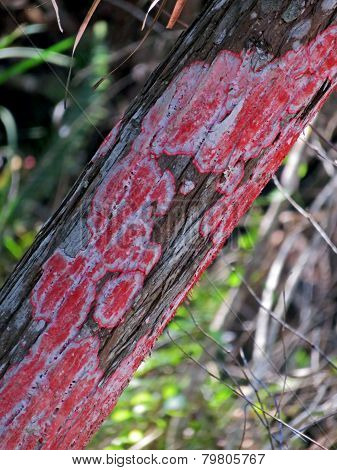 Red Lichen Growing On Tree Trunk