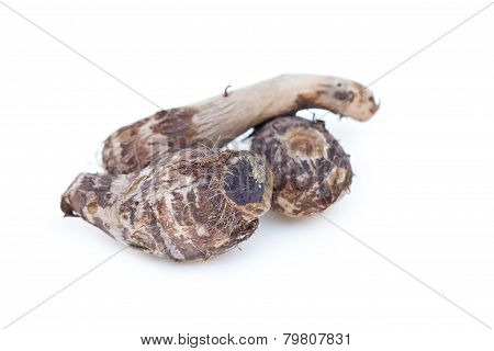 Taro Isolated On White.