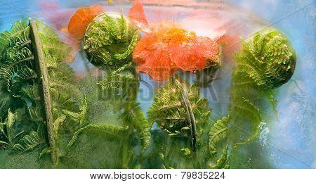 Frozen   Flower Of   Bennet  And Fern