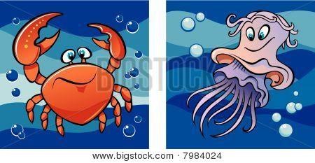Marine leven: krab en kwallen