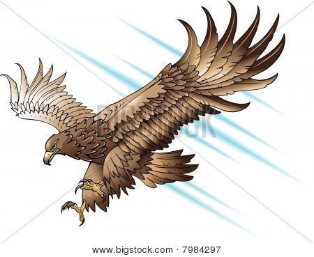 Attacking eagle