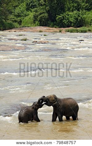 Elephants Trunk Wrestling