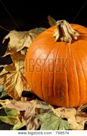 pumpkin on leafs