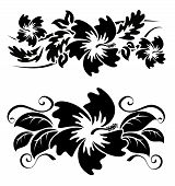 Various hibiscus hawaiian tropical flowers black and white poster