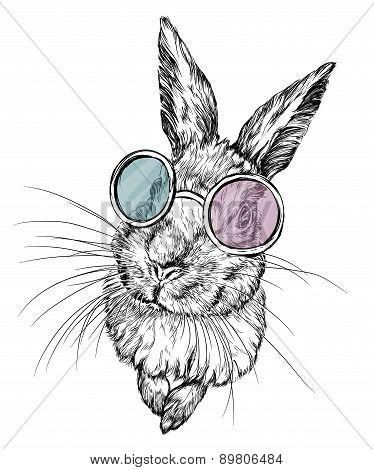 Hand drawn illustration of a rabbit in glasses