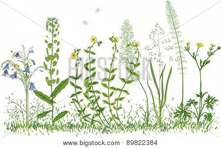 Wild flowers isolated on a white background