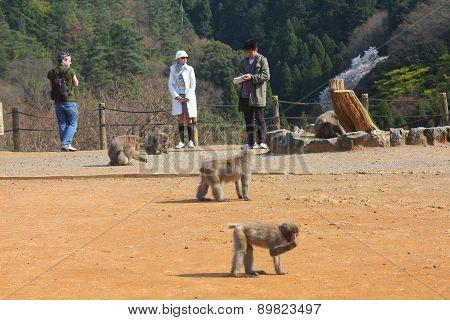 Arashiyama Monkeys