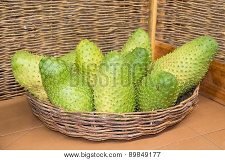 Annona muricata (graviola) is a fruit of the custard apple tree family in tropical climates through the world.
