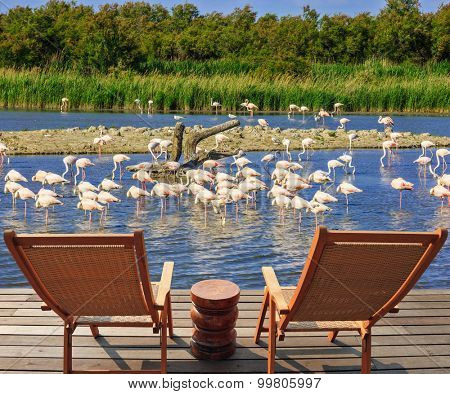 Park Camargue in delta of Rhone. Comfortable lounge chairs on wooden platform for rest and  birdwatching. Flock of pink flamingos in the shallow lake poster