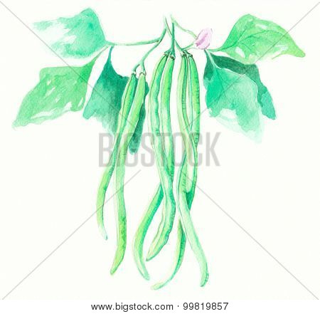 String beans water color painting