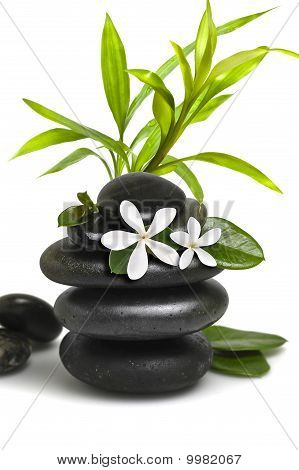 Spa Still Life, With White Flowers And Bamboo Leavs