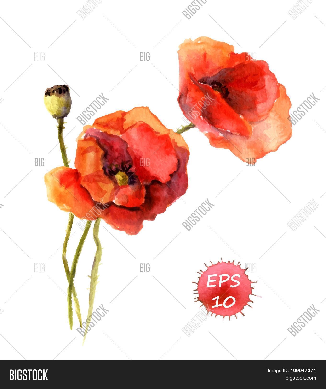 Watercolor Poppy Vector Photo Free Trial Bigstock