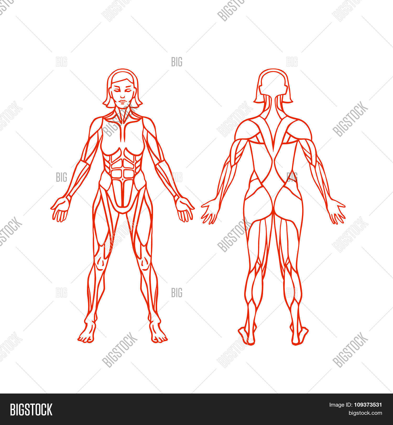 Anatomy Female Vector & Photo (Free Trial) | Bigstock