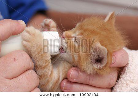 Bottle feeding kitten