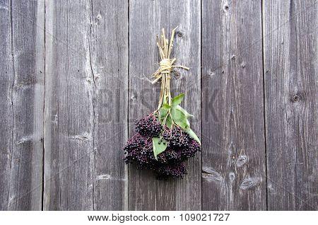 Bundle Of Sambucus Nigra Berries