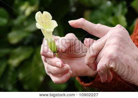 Arthritic hands pointing at flower