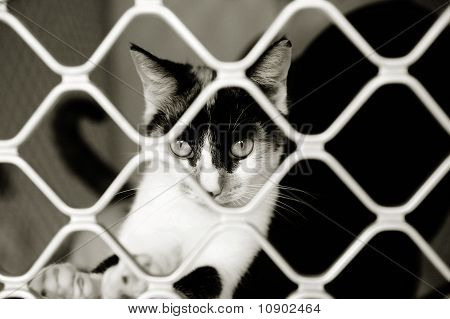 Cat looking out of a cage