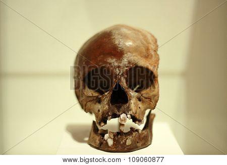 Real old human skull