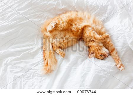 Ginger Cat Lies On Bed. The Fluffy Pet Comfortably Settled To Sleep Or To Play. Cute Cozy Background